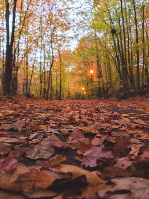 blaadjes herfst op de grond