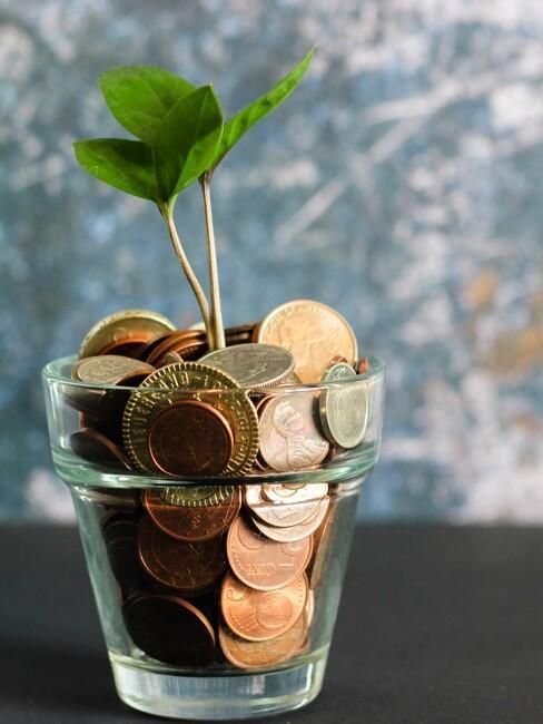 glazen potje met muntgeld en een groeiende plant