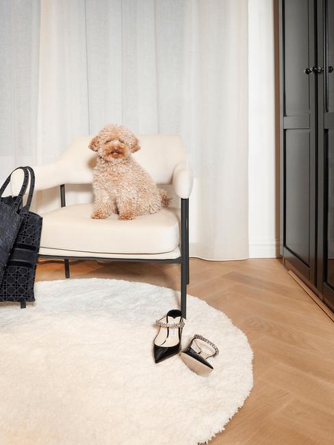 Hond van rianne meijer op westwing witte stoel
