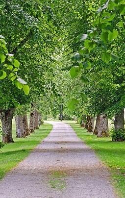 pad met leilinde bomen er naast