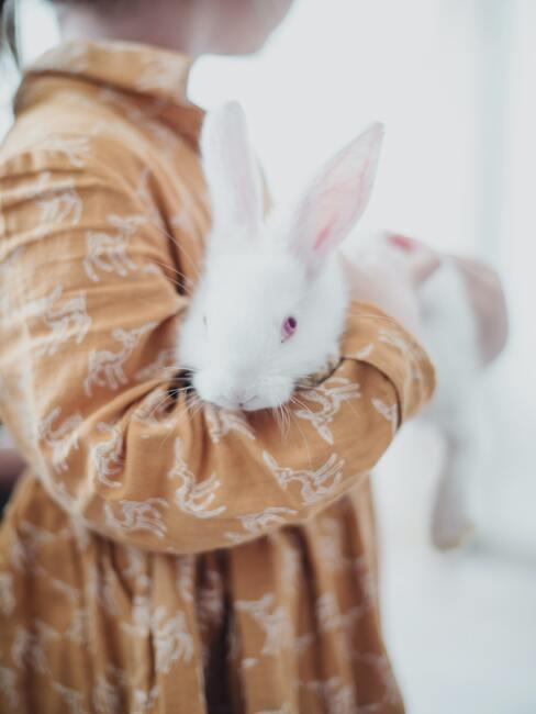 Kind houdt wit konijn in handen