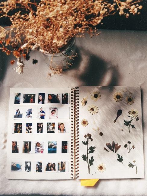 zelf een herbarium maken : gedroogde planten in een wit boekje