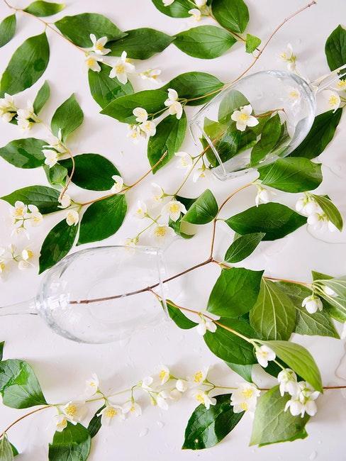vers gesneden takken toscaanse jasmijn op een witte ondergrond