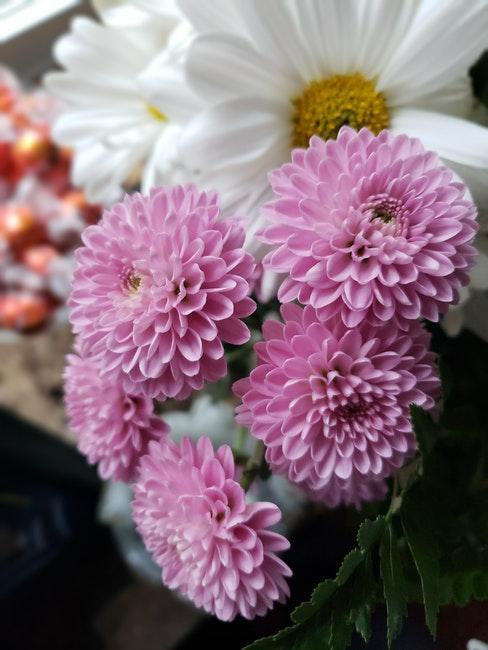 dahlia in bloemboeket