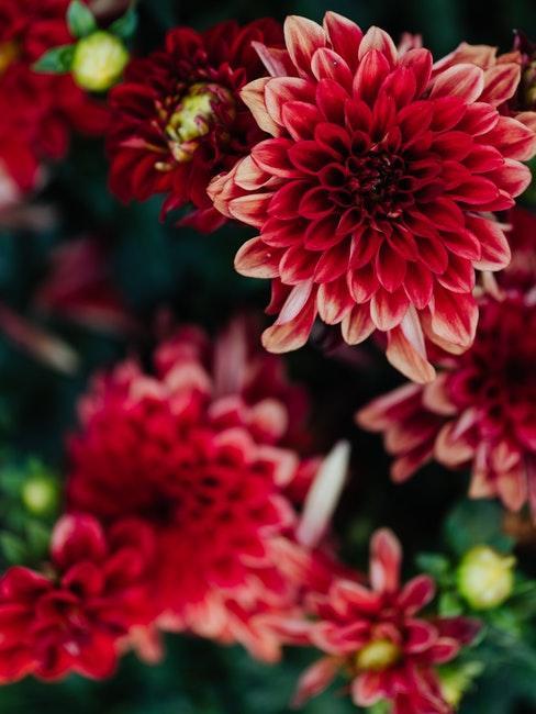 plantenverzorging in de lente en zomerperiode