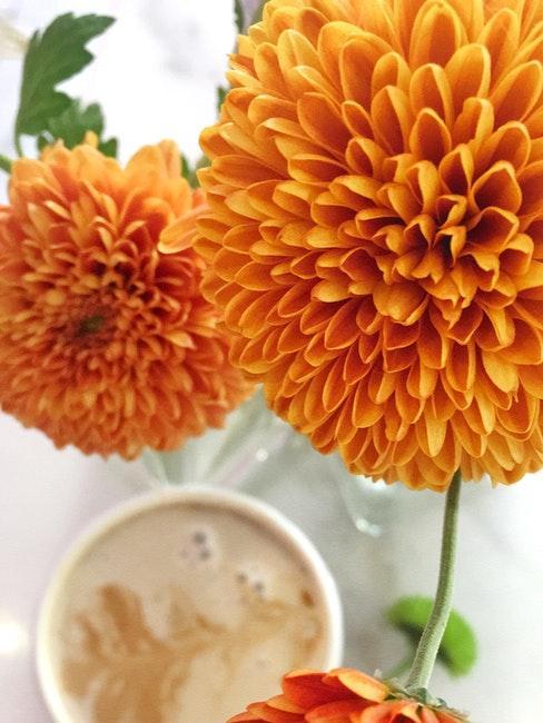 oranje dahlia in vaas met koffiekop