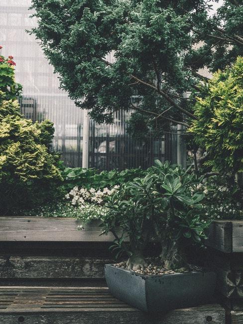 schaduwtuin met planten in potten
