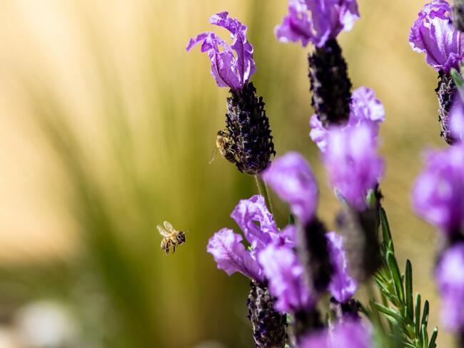 dropplant: plantenverzorging in de lente en zomerperiode