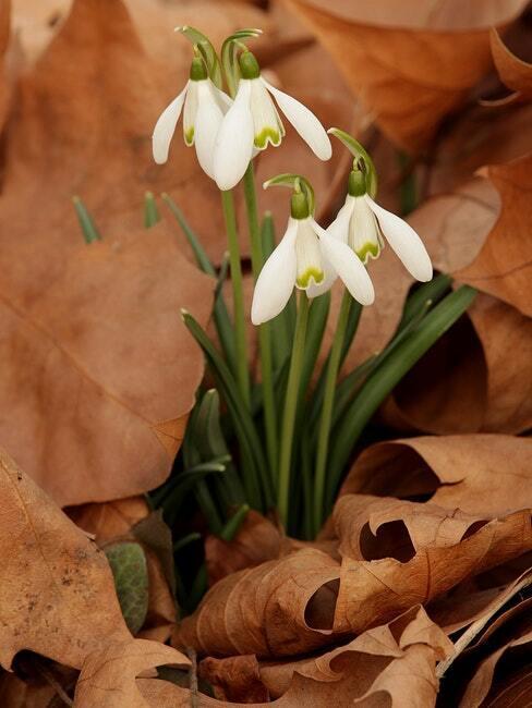prachtig bloeiende planten in de tuin