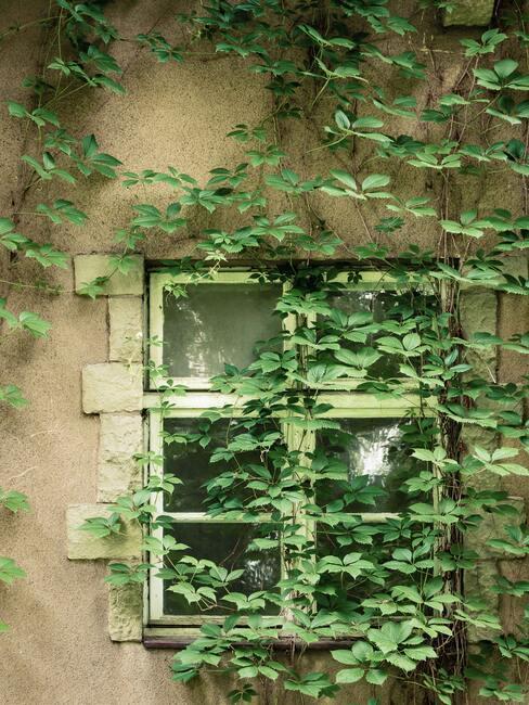 planten in de tuin bij het huis, lente, zon