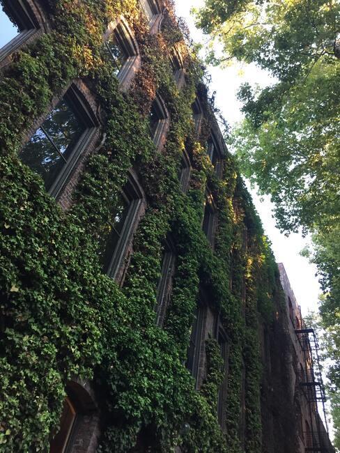 gebouw met klimplanten