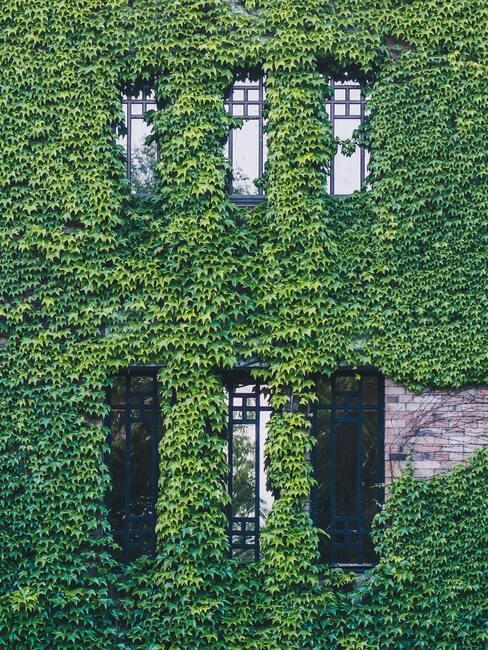 gebouw bedekt met groene klimplanten