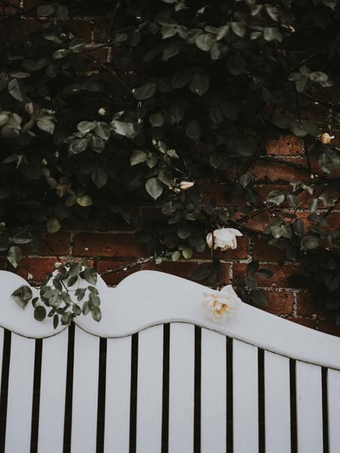 wit bankje met witte klimroos