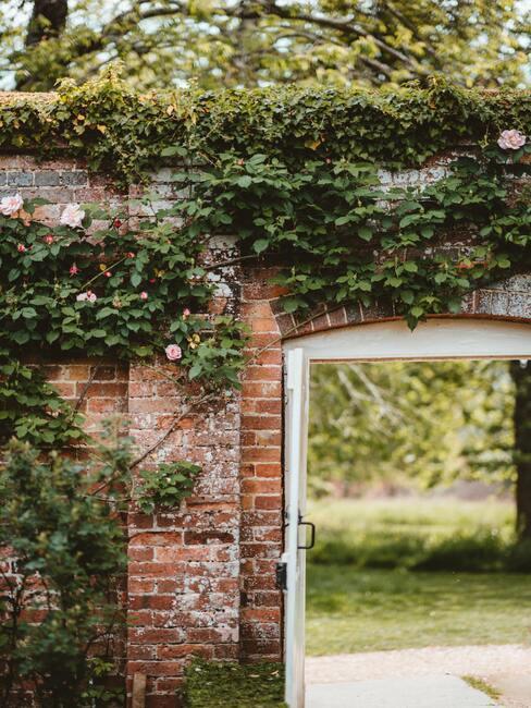 muur met klimplant