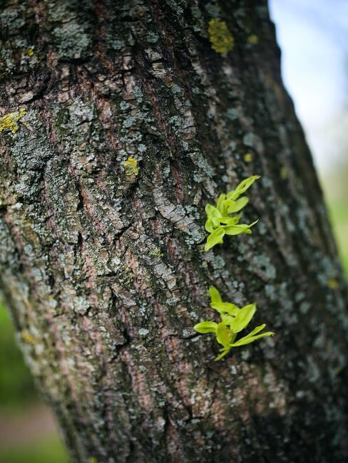 stam van boom