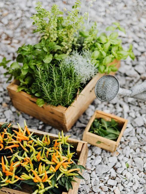 het planten van plantjes in houten bakken