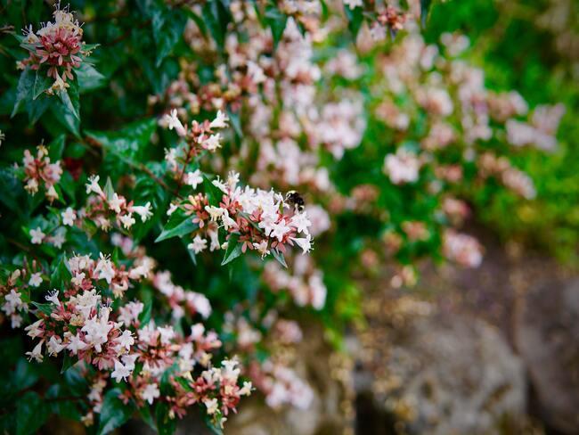 bloemen groeien in de tuin