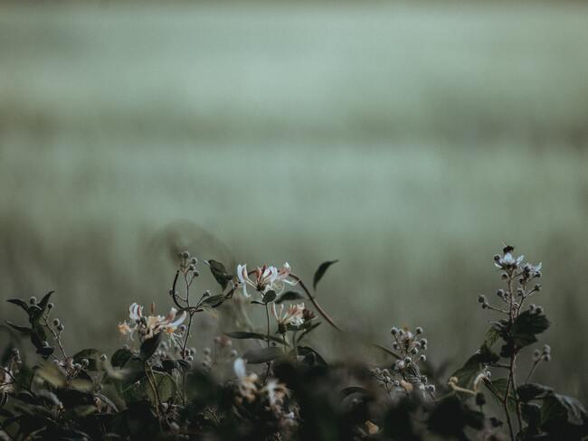 prachtig bloeiende lonicera en bloemen in het voorjaar in de tuin naast het huis