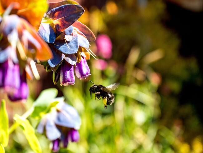 verzorging van planten in de tuin in lente en winter, eenjarige planten