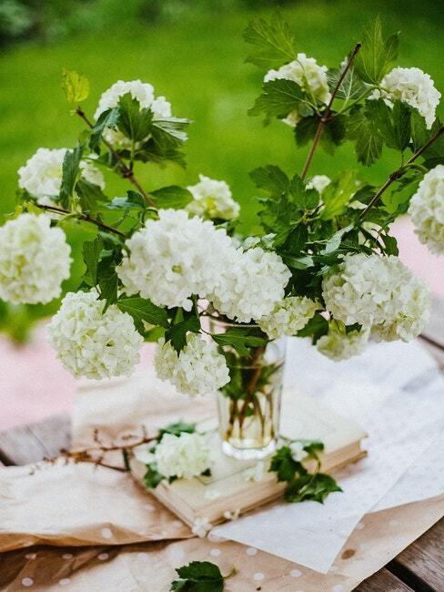 prachtig bloeiende Viburnum Tinus en bloemen in het voorjaar in de tuin naast het huis