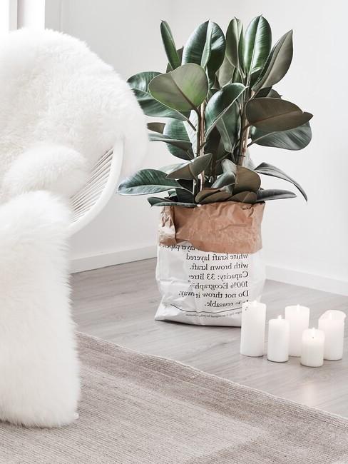 Plant met witte stoel en pluche