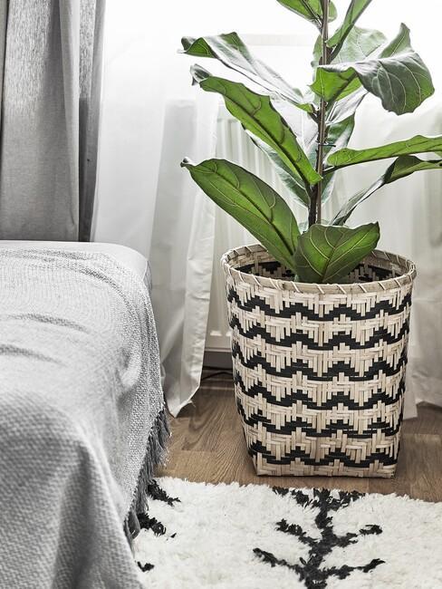 Plant in rieten mand met zwarte details
