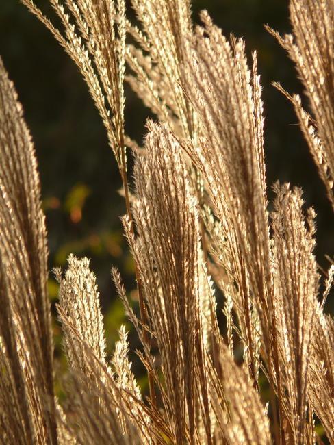 verzorging van planten en bomen in de tuin, water geven, snoeien