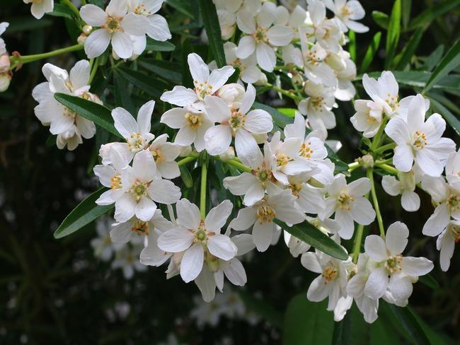 lente in de tuin, prachtig bloeiende bloemen