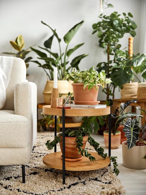 Woonkamer vol huiskamer planten