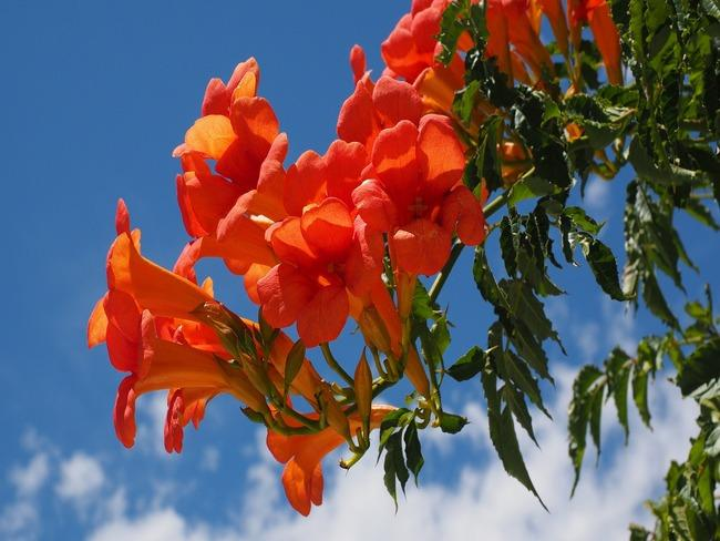 trompetbloem: tuin met prachtige bloemen en bomen