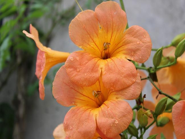 prachtig bloeiende planten en bomen in de tuin.