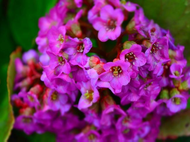 verzorging van planten in de tuin in de lente en zomer.