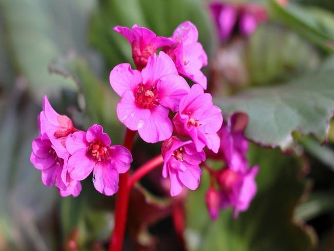 Schoenlappersplant: tuin met prachtige bloemen en bomen