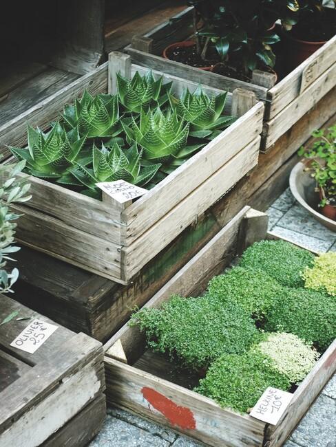 houten bak met planten