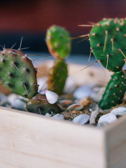 houten bak met groene cactus