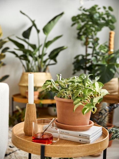 houten tafel met veel plantenbakken