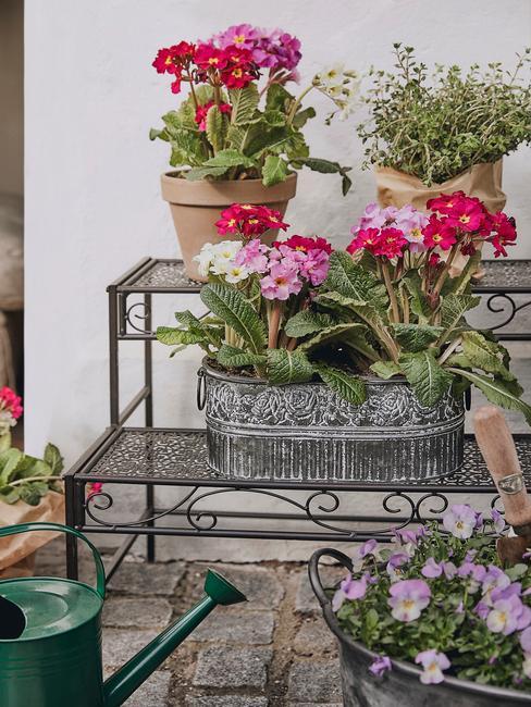 prachtig bloeiende planten en bomen in de tuin in de plantenpotten