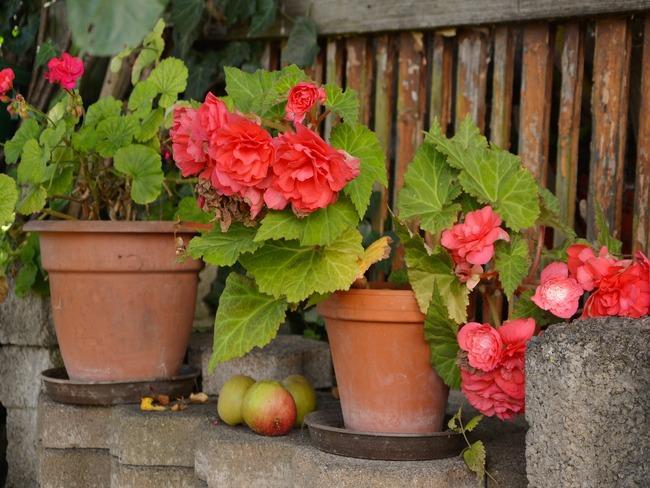 Ajuga reptans tuin met prachtige bloemen en bomen