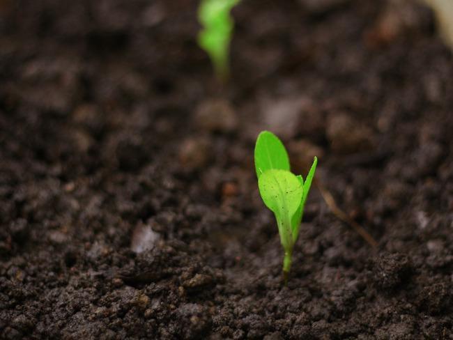 het planten van zaden en planten in de tuin in de lente en zomer