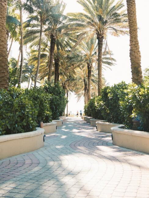 biege borders met palmbomen en groene bosjes