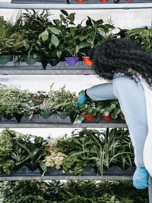 het kweken van planten