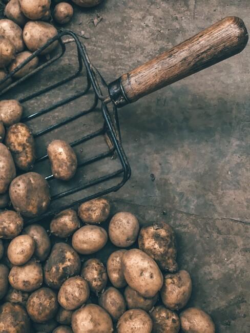 zwarte vork met houten handvat om aardappels te oogsten