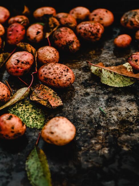 aardappels in aarde