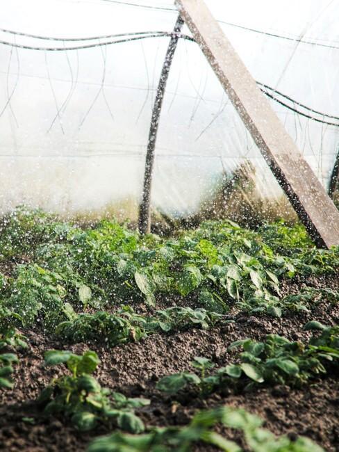 planten in een kas kweken