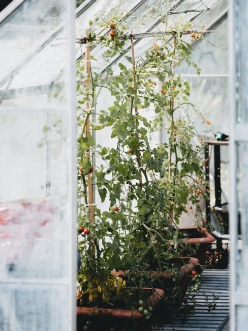 kweekkas met grote planten