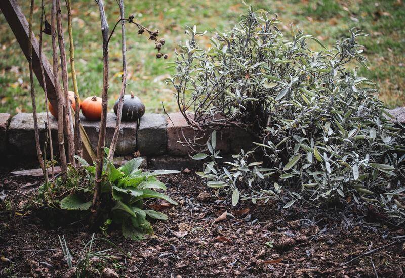 groeiende planten in een moestuin