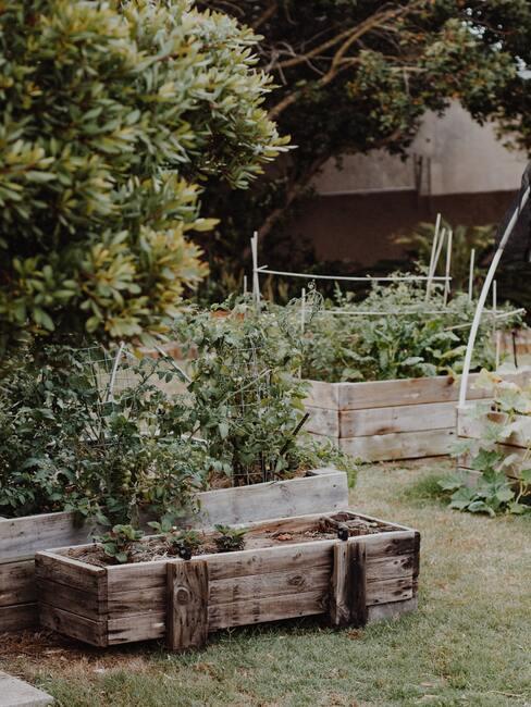 houten bakken met groene planten