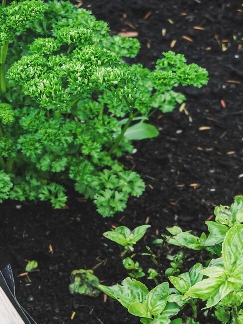 moestuin grond met kruidenplanten