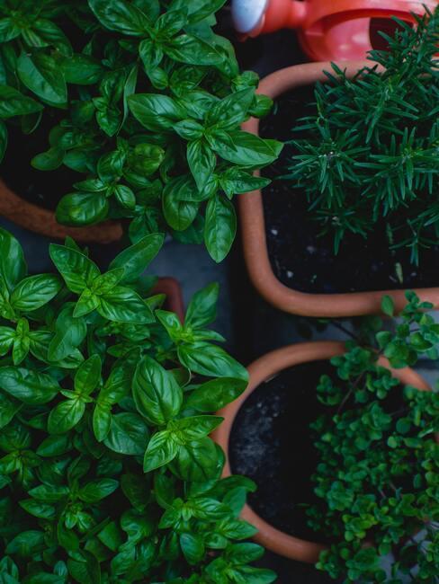 keramieke potten met kruidenplanten