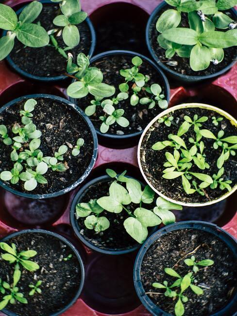 ronde potten met kruidenplanten